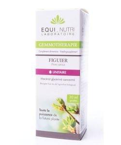Figuier (Ficus Carica) bourgeon BIO, 30ml
