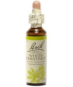 Marronnier blanc - White Chestnut (n°35)