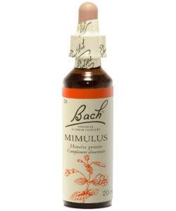 Mimule - Mimulus (n°20)