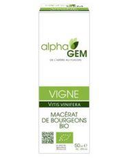 Vine (Vitis will vinifera) bud