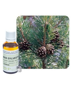 Pin sylvestre (Pinus Sylvestris), 30 ml