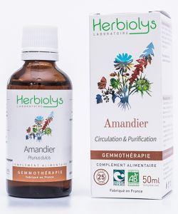Amandier (prunus amygdalus) - bourgeons frais BIO, 50ml