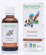 Pommier (malus communis) - bourgeons frais