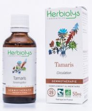 Tamaris (tamarix gallica) - bourgeons frais