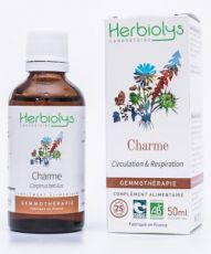Charme (carpinus betulus) - bourgeons frais