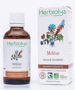 Mélèze (larix europaea) - bourgeons frais BIO, 50ml