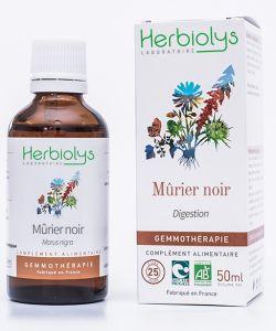 Mûrier noir (morus nigra) - bourgeons frais BIO, 50ml