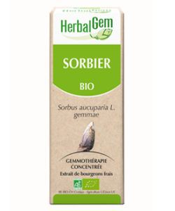 Sorbier (Sorbus aucuparia) bourgeon BIO, 15ml