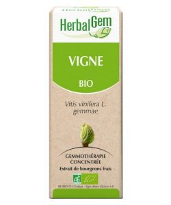 Vigne (Vitis vinifera) bourgeon BIO, 15 ml