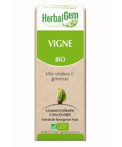 Vigne (Vitis vinifera) bourgeon BIO, 50ml