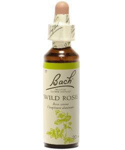Eglantier - Wild Rose (n°37), 20 ml