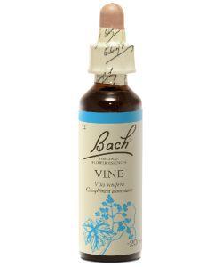Vigne - Vine (n°32), 20ml