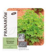 Géranium bourbon (Pelarg. x asper. bourbon)