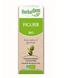 Figuier (Ficus carica) bourgeon BIO, 15ml