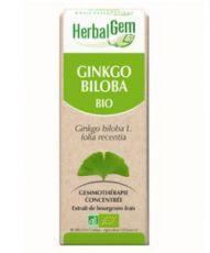 Ginkgo (Ginkgo biloba) bourgeon