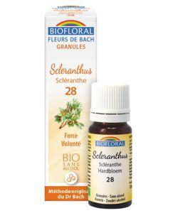 Scléranthe - Scléranthus (n°28), granules sans alcool BIO, 10ml