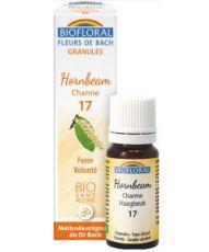Charme - Hornbeam (n°17), granules sans alcool