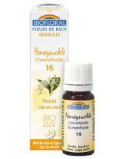 Chèvrefeuille - Honeysuckle (n°16), granules sans alcool