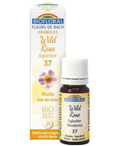 Eglantier - Wild Rose (n°37), granules sans alcool BIO, 10ml