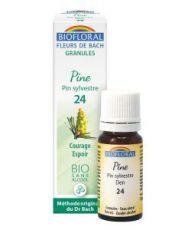 Pin sylvestre - Pine (n°24), granules sans alcool