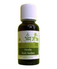Airelle (Vaccinium vitis idaea) bourgeon