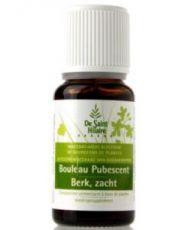 Bouleau pubescent (Betula pubescent) bourgeon