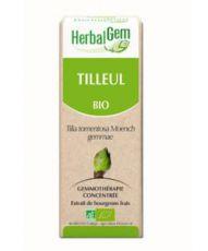 Tilleul (Tilia tomentosa) bourgeon