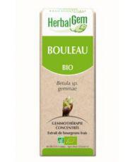 Bouleau (Betula) bourgeon