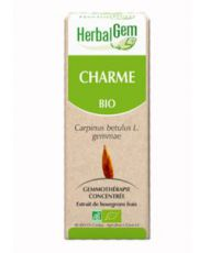 Charme (Carpinus betulus) bourgeon