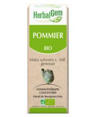 Pommier (Malus sylvestris) bourgeon
