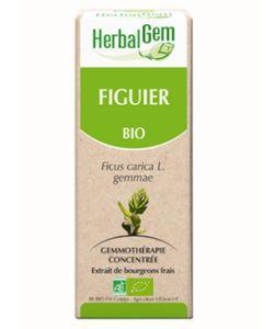 Figuier (Ficus carica) bourgeon BIO, 50ml
