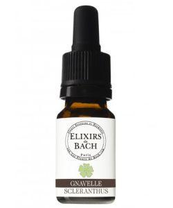 Gnavelle - Scleranthus (Fleur de Bach n°28) BIO, 10ml