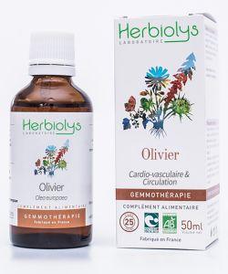 Olivier (Olea europaea) - bourgeons frais - sans emballage