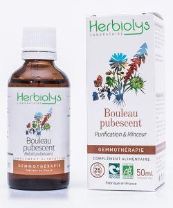 Bouleau pubescent (Betula pubescent) - bourgeons frais BIO, 50ml