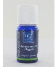 Géranium rosat d'Egypte (Pelargonium roseum - Pelargonium asperum)