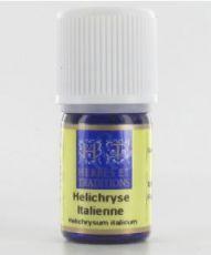Helichryse italienne - Immortelle (Helichrysum italicum ssp serotinum)