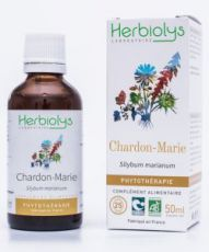 Chardon Marie (Silybum marianum) - Macérat de plantes fraîches