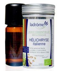 Hélichryse italienne - Immortelle (Helichrysum italicum)
