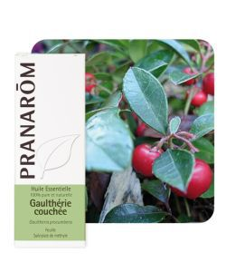 Gaulthérie couchée (Gaultheria procumbens)