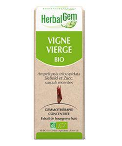 Vigne vierge (Ampelopsis veitchii) j.p. BIO, 15ml