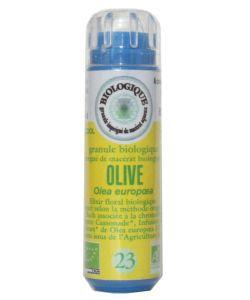 Olivier - Olive (n°23) SANS ALCOOL
