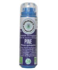 Pin Sylvestre - Pine (n°24) SANS ALCOOL