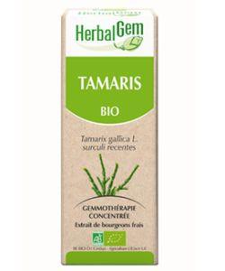 Tamaris (Tamarix gallica) bourgeon BIO, 50ml
