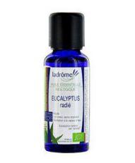 Eucalyptus radié huile essentielle (Eucalyptus radiata)
