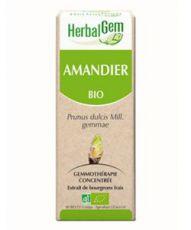 Amandier (Prunus amygdalus) bourgeon