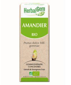 Amandier (Prunus amygdalus) bourgeon BIO, 50ml