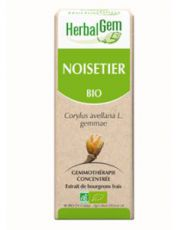 Noisetier (Corylus avellana) bourgeon