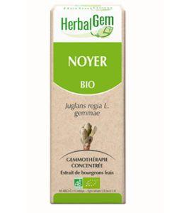 Noyer (Juglans regia) bourgeon BIO, 50ml