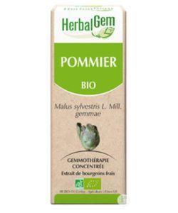 Pommier (Malus sylvestris) bourgeon BIO, 50ml