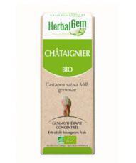 Châtaignier (Castanea vesca) bourgeon